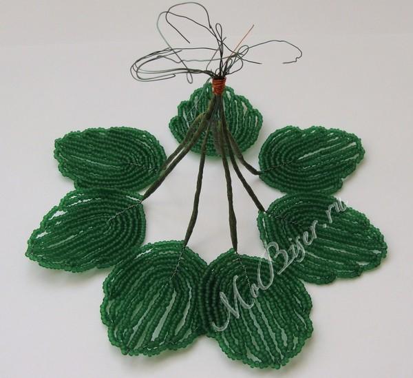 листья фиалки